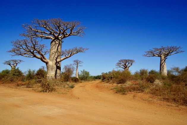 Een splitsing vol bomen
