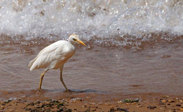 Een visje meepikken aan het Victoriameer