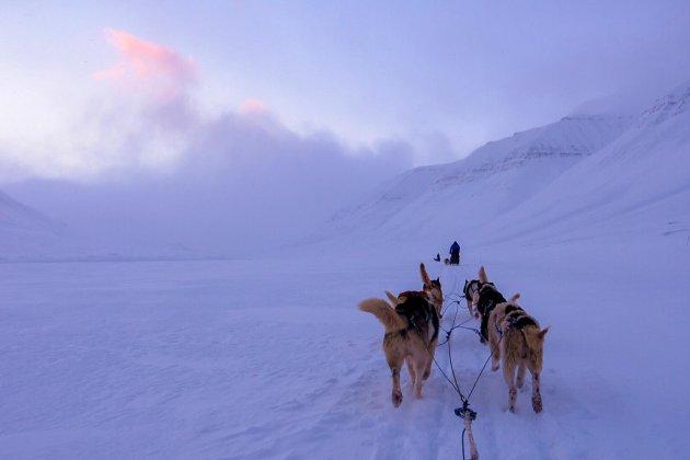 Svalbard Mushing