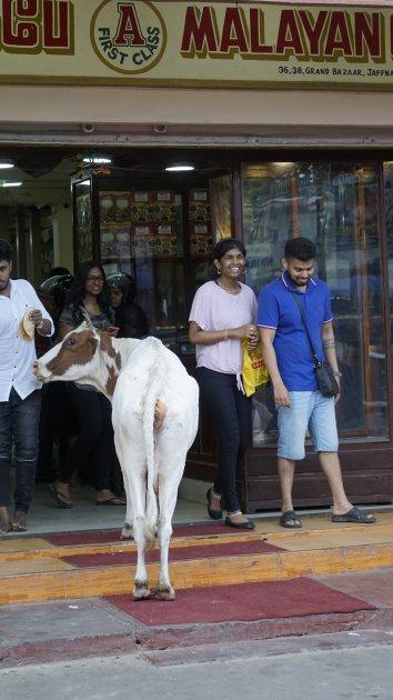 Koe weet beste restaurant te vinden in Jaffna
