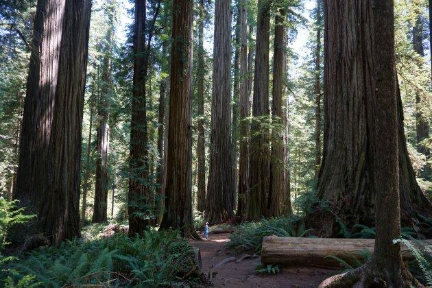 klein duimpje in Redwood