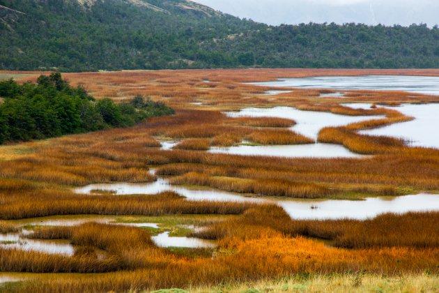 De moerassen van Chili