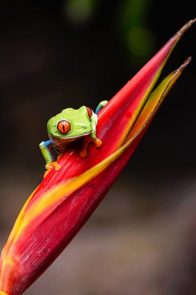 Kleurrijk kikkertje