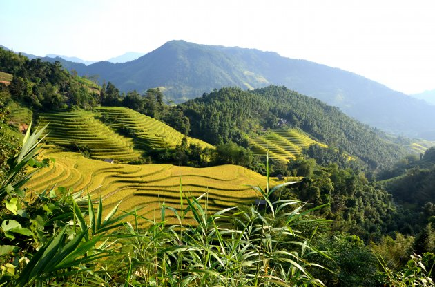Rijstterrassen van Thung Nguyen.