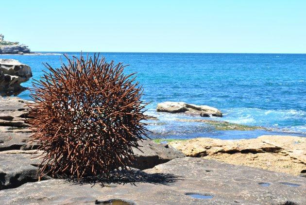 Stekelige stalen zee-egel die even uitrust op het droge