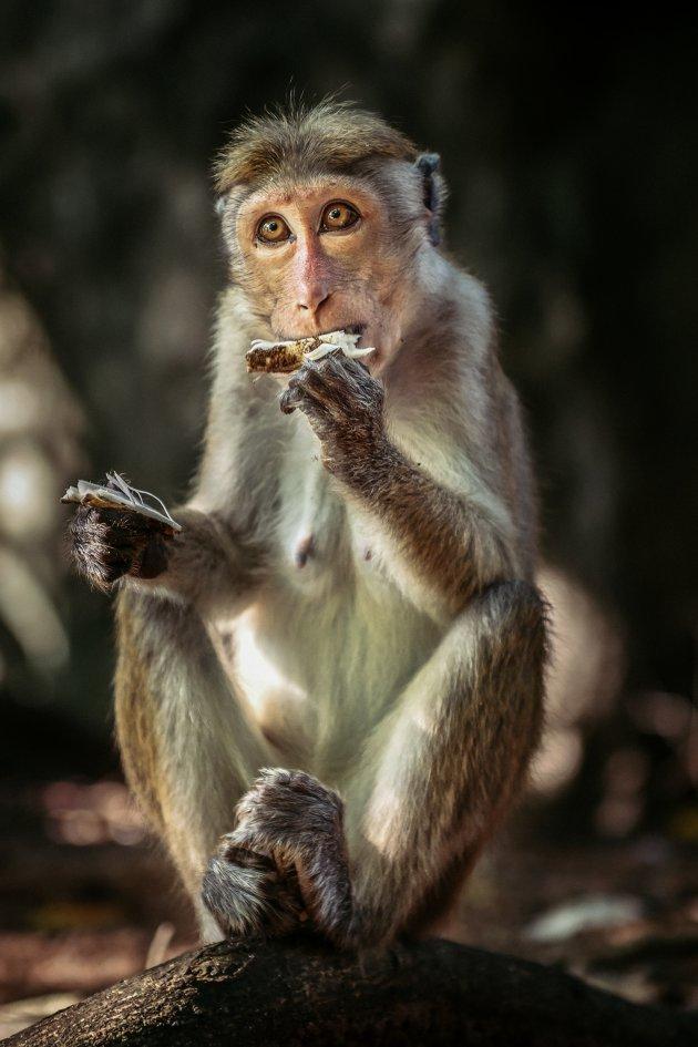 wildlife Sri Lanka