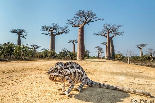100% Madagaskar