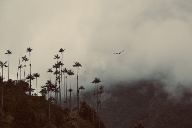 Hiken in Colombia