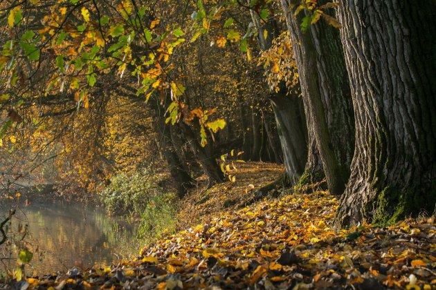 Herfst aan de Dommel