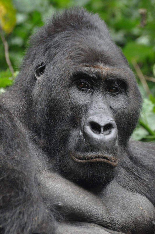 Bonane, zoon van Chimanuka