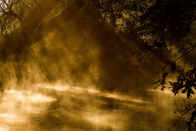 Gouden licht bij de Dommel