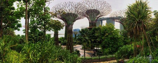 Hoge bomen in Singapore.