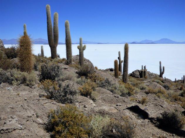 Isla Incahuasi in de Salar de Uyuni