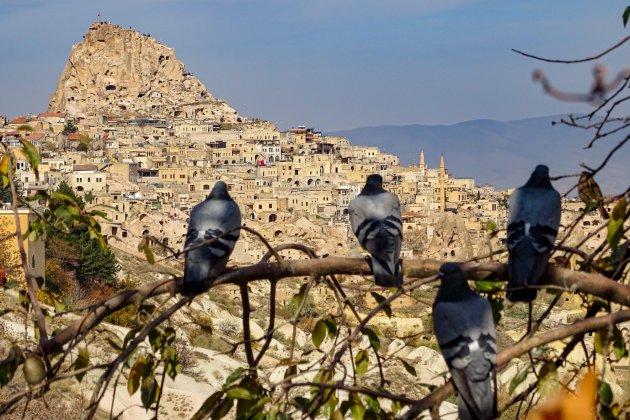 Pigeonvalley