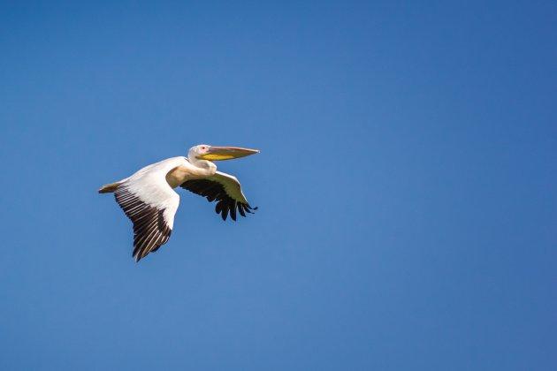 Gelukt, hij vliegt