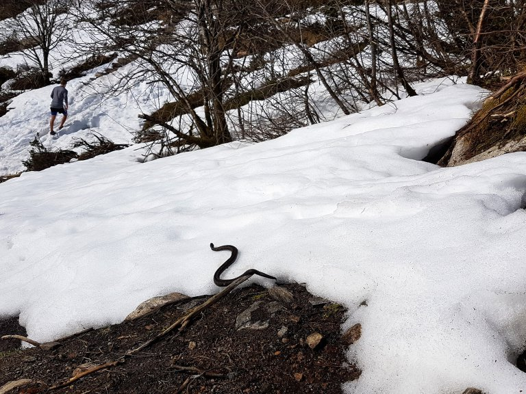 Bang voor de slang