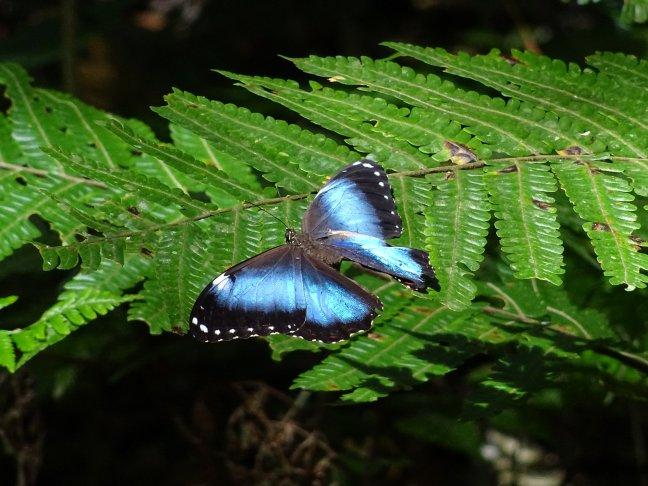 Vlinders spotten in N.P. Amboro