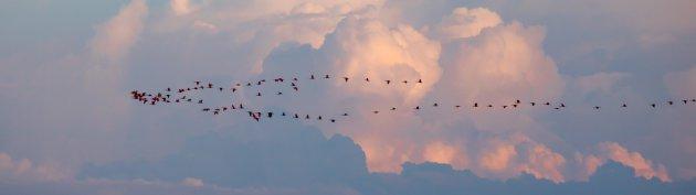 Rode ibissen in Bigi Pan