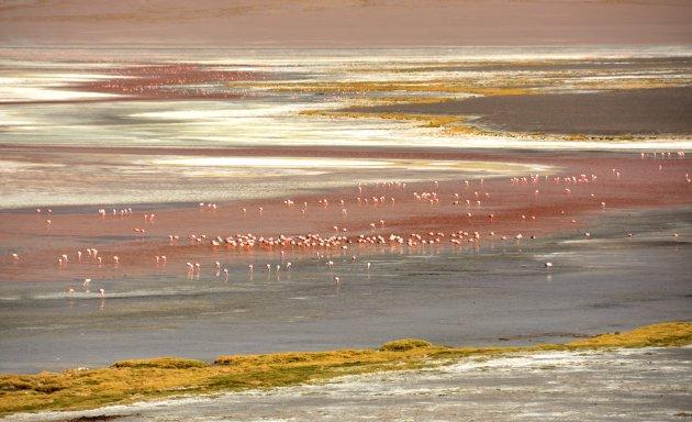 Flamingo's aan het Laguna Colorada