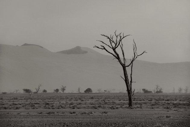 Een woestijn zonder kleur