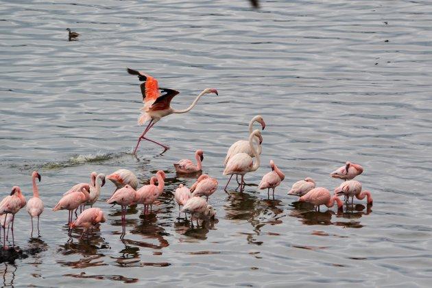 Arusha National park - prachtige flamingo's