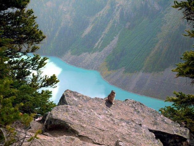 Blijf niet hangen bij het Fairmont Château Lake Louise