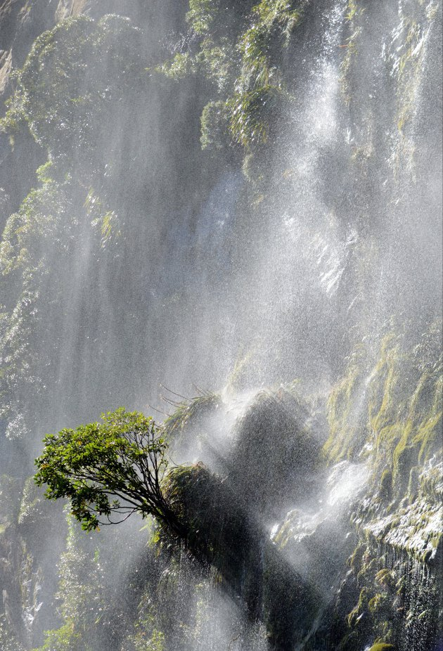 Bestand tegen het watergeweld in Milford Sound