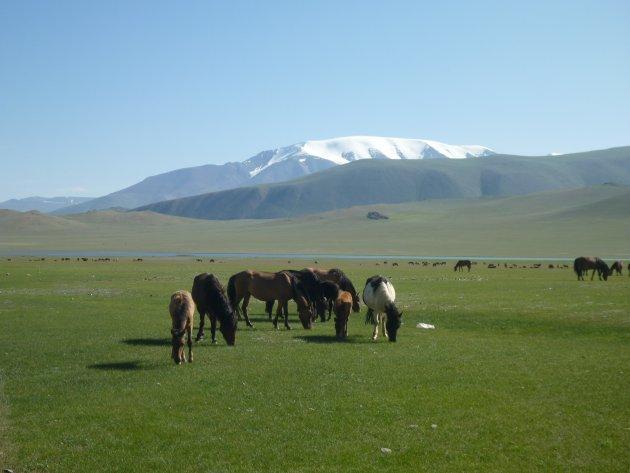 Mongolie in een beeld