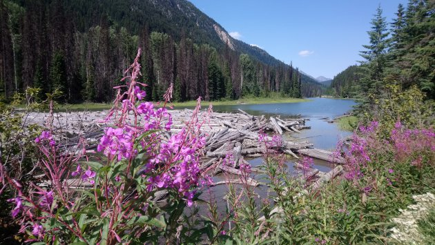 Canadian Rocky Mountains in summer