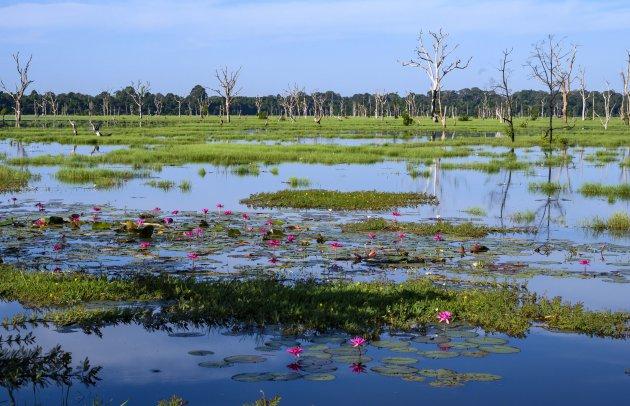 Onaards landschap bij Neak Poun