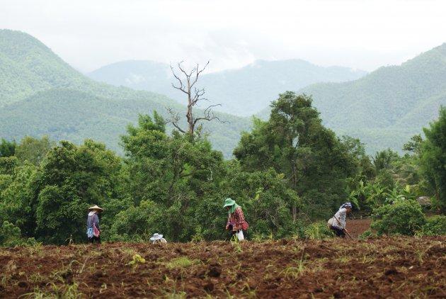 Vrouwen aan het werk in het veld