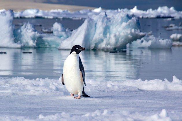 Alleen op het ijs