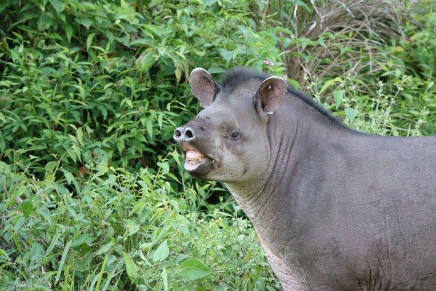 Prachtige glimlach in de prachtige Surinaamse Amazone