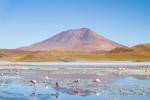Flamingo's en ander natuurlijk schoon in Bolivia