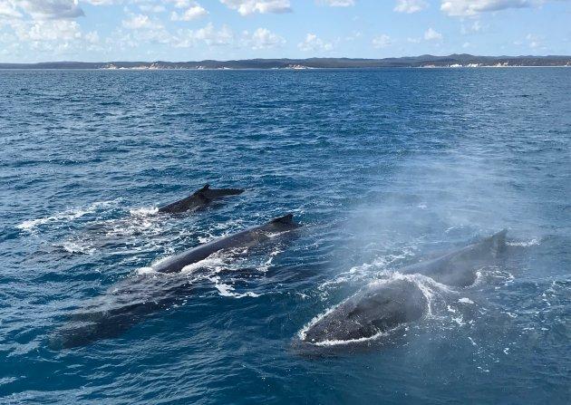 Nieuwsgierige walvissen