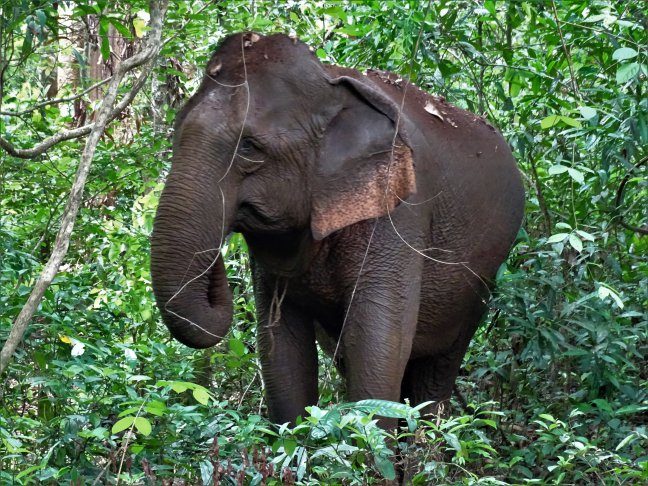 Back to basic: the Elephant Valley Project