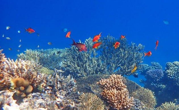 Kleurrijk onderwaterlandschap