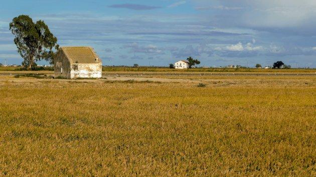Ebrodelta, velden met rijst
