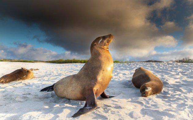 Trots om een zeeleeuw te zijn