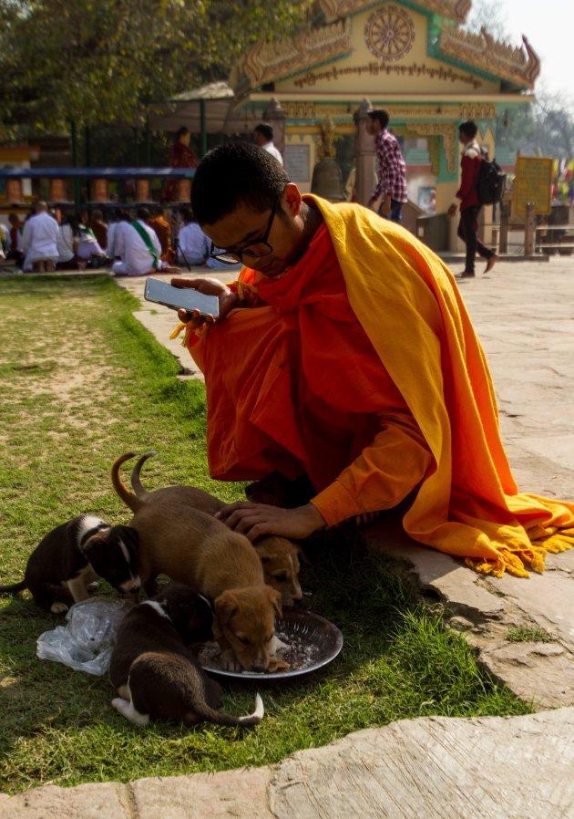 tibet in india