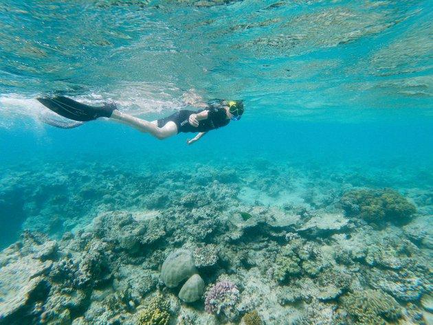 Samen snorkelen op het rif