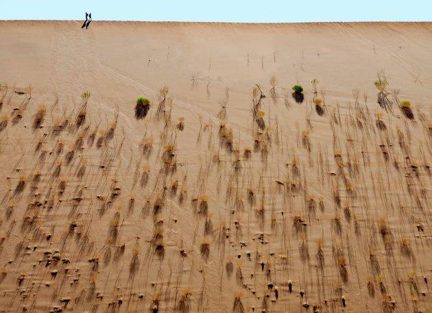 Overleven in de Namibwoestijn