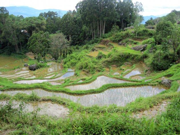 Terrassen van Toraja