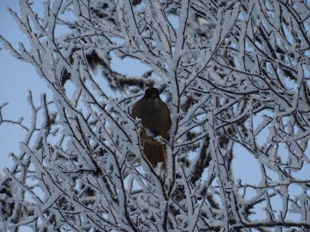 Fins Lapland: een echt winter wonderland