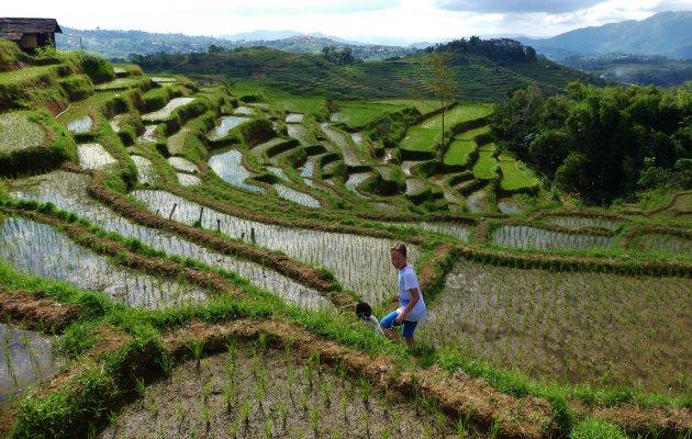 Wandelen door de rijstterrassen van Ruteng