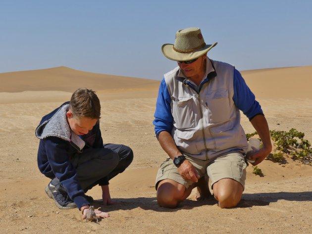 Kameleon in de Namib woestijn