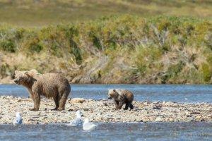 Grizzly met haar jongen.
