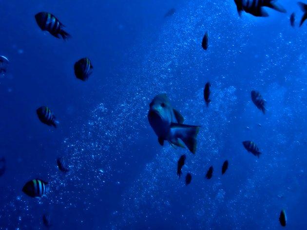 De blauwe diepte
