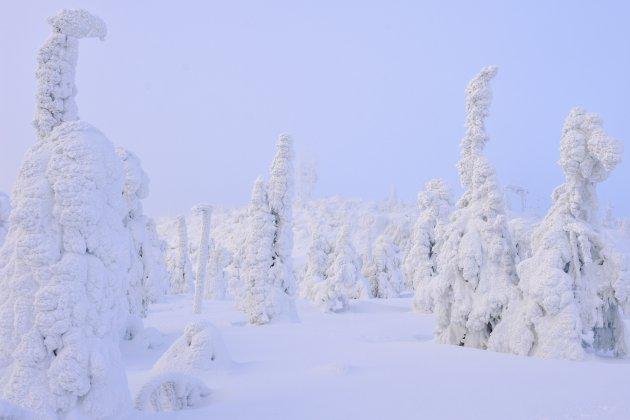Marshmallow trees
