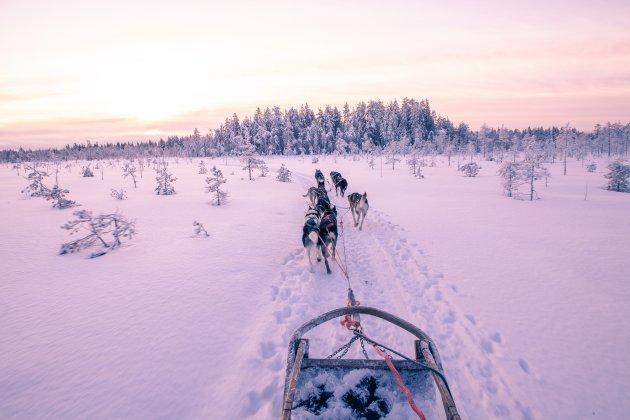 Ontdek de ongerepte natuur van Fins-Lapland met huskyslee